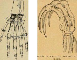 hand-bones