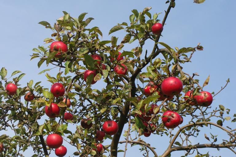 Marketing is nurturing an orchard